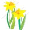 easter printable flashcards, daffodils