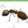 printable flashcards, ant