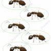 printable flashcards, playset ants
