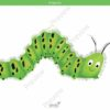 printable flashcards, caterpillar