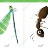 printable flashcards, dragonfly, ant