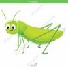 printable flashcards, grasshopper