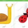 printable flashcards, snail, ladybird