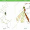printable flashcards, spider, mosquito